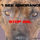 "Pitbull T-Shirt  ""see ignorance"""
