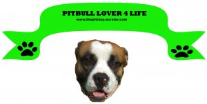 pitbull banner t-shirt