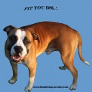"pitbull t-shirt  ""pit you bsl"""