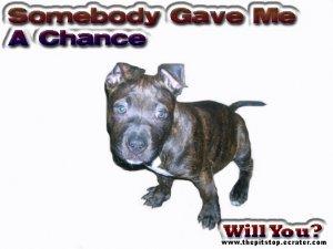 "pitbull t-shirt  ""Somebody Gave Me A Chance"""