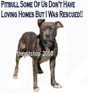 "Brand New Pitbull T-Shirt  ""Loving homes 2"""