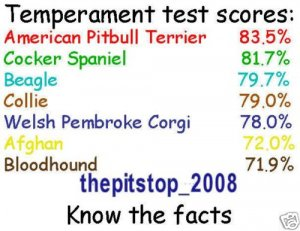 "Brand New Pitbull T-Shirt  ""Temp Test"""