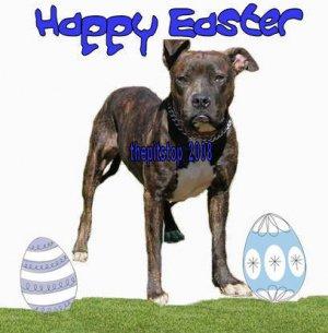 "Brand New Pitbull T-Shirt  ""Happy Easter"""