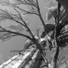 Saguaro Cactus and Palo Verde Tree Photograph Photo Print
