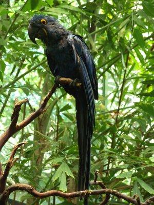 Blue Bird 11x14