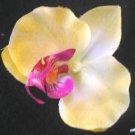 yellow Silk Orchid