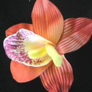 orange foam Orchid