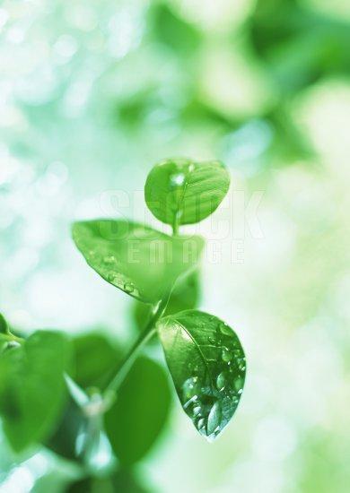 Leaf #01