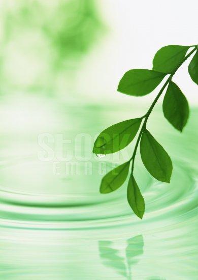 Leaf #05