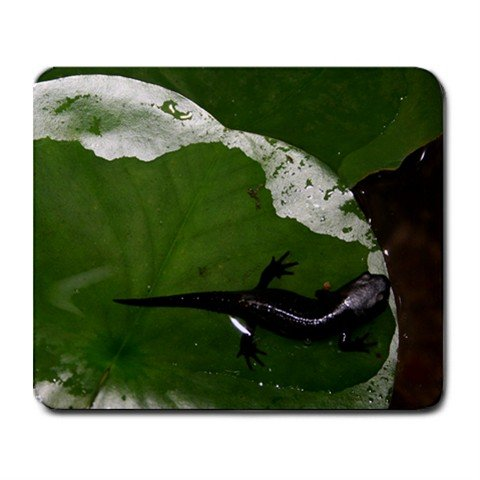 Mousepad FREE SHIPPING FireBelly Newt ! Lily Pad