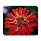 Mousepad FREE SHIPPING daisy like flower