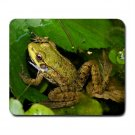Mousepad FREE SHIPPING very nice frog in his pond