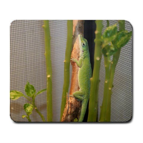 Mousepad FREE SHIPPING Zood the Anole