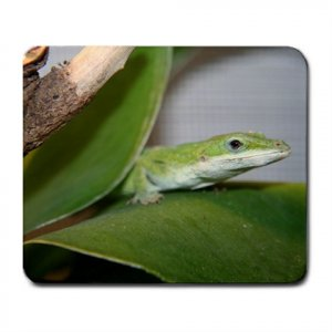 Mousepad FREE SHIPPING Very cute Zood on her leaf
