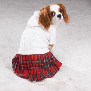 Casual Canine Back To School Jumper Size XS