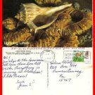 Post Card TX Texas State Sea Shell, Lightning Whelk ~Mailed 1992