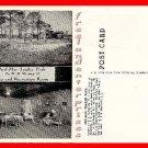 Post Card SC Hardeeville Ard-Mar Trailer Park Hi-Way 17, South Carolina Unused