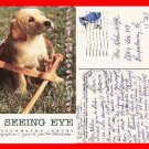 Post Card NJ Yellow Labrador Puppy Seeing Eye Morristown, New Jersey