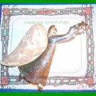 Christmas PIN #0172 Silvertone & Goldtone ANGEL w/Crackle Mother of Pearl Wings