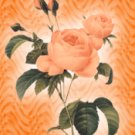 Orange Roses eCrator Store Logo Set Web Set OOAK #E05