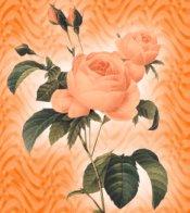 Orange Roses eCrator Store Logo Set Web Set OOAK #E05