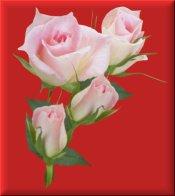 Pink Roses on Red eCrator Store Logo Set Web Set OOAK #E23