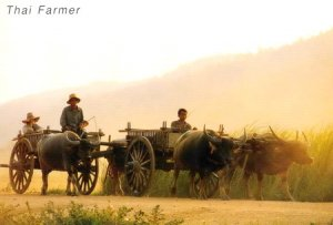 Thai Farmer Folkways Postcard