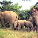 Elephant's Family Postcard