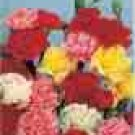 CARNATION**MIX**GRENADIN SERIES***500 seed