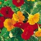 NASTURTIUM-ALASKA **EDIBLE FLOWERS***125 SEED!