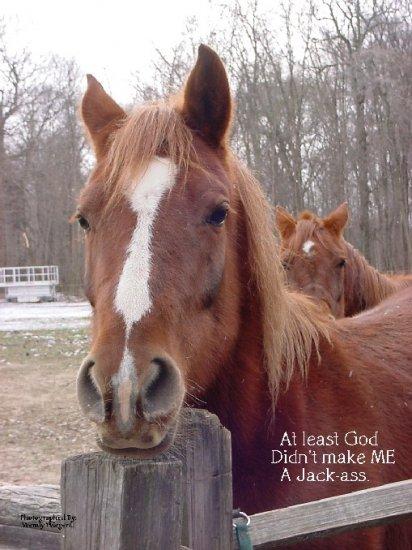 """HUMOROUS HORSE**8""""X10"""""""