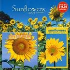SUNFLOWERS 2007 GIFT SET