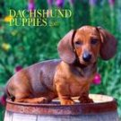 DACHSHUND PUPPIES 2007 WALL CALENDAR
