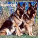 FOR THE LOVE OF GERMAN SHEPHERDS 2007 DELUXE WALL CALENDAR