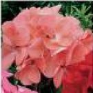 GERANIUM ORBIT-DEEP SALMON*****50 SEED!