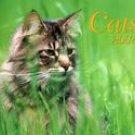 CATS 2007 DELUXE WALL CALENDAR