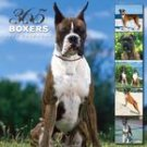 365 DAYS OF BOXERS 2007 WALL CALENDAR