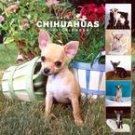 365 DAYS OF CHIHUAHUAS 2007 WALL CALENDAR