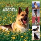 365 DAYS OF GERMAN SHEPHERDS 2007 WALL CALENDAR