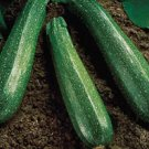 ZUCHINNI-SPINLESS BEAUTY****125 SEED!