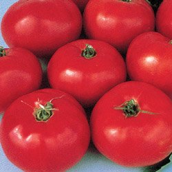 TOMATO-RED BRANDYWINE-HEIRLOOM!****500 SEEDS