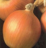 YELLOW STORAGE ONION*NEW YORK EARLY**ORGANIC & HEIRLOOM!**2,000 SEEDS!