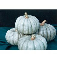 PUMPKIN*JARRAHDALE****HEIRLOOM***150 SEEDS