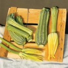 ZUCHINNI*COSTATA ROMANESCO***HEIRLOOM****150 SEEDS!