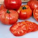 TOMATO*PRUDEN'S PURPLE***ORGANIC & HEIRLOOM!***500 SEED!