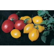 TOMATO*WONDER LIGHT (ROMA TYPE)***ORGANIC & HEIRLOOM*******20 SEEDS!