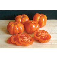 TOMATO*STRIPED CAVERN****ORGANIC & HEIRLOOM***500 SEED!