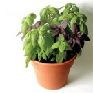 BASIL*BOUQUET MIX*********2,500 SEED!