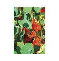 NASTURTIUM*EMPRESS OF INDIA***HEIRLOOM***25 SEED