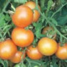 TOMATO**YELLOW BRANDYWINE****HEIRLOOM & ORGANIC***30 SEED